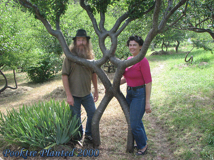Peter Cook, Person Tree and Becky Northey